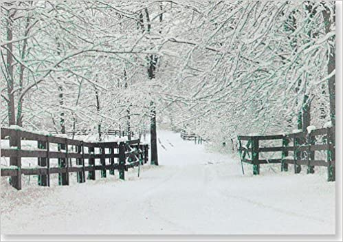 Winter Tracks Holiday Boxed Cards (Christmas Cards, Holiday Cards ...