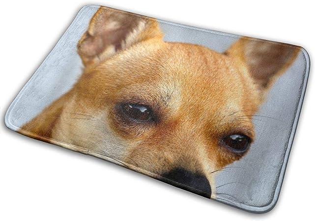 Imagen deBLSYP Chihuahua Perro Sobel Retrato de Cabeza Canina Marrón Puerta Alfombrilla Alfombrilla Alfombrilla de Entrada Alfombra Antideslizante Alfombra de Piso Alfombra Interior Alfombra de Bienvenida Alf