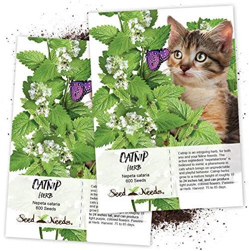 NEPETA CATARIA Perennial CATMINT 800 seeds