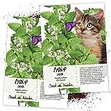 Seed Needs, Catnip Herb (Nepeta cataria) Twin