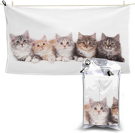 Grupo de pequeños gatitos a rayas Gatos en una cesta Toallas de gimnasio Microfibra Toalla de