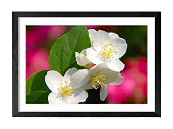 Amazon Four Petals White Flowers Natural Scenery Art Print