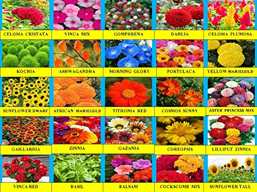 AARNA EXOTICS Summer flower & Herb seeds combo-25 Variety,2630+ seeds