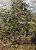 Philip-Lorca DiCorcia, Geoff Dyer, 3866788355