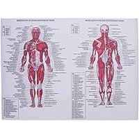 Hemobllo Hospital Laboratory Home School ambulatorio sistema muscular