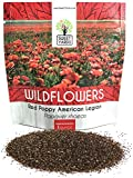 bulk corn seed - Red Corn Poppy Seeds - Large 1 Ounce Packet - Over 200,000 Flower Seeds