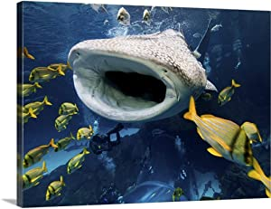 "GREATBIGCANVAS Whale Shark in Captivity Canvas Wall Art Print, 40""x30""x1.5"""