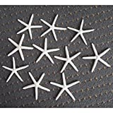 BlackC Home 10X 4-5'' White White Finger Pencil Starfish Star Sea Shell Wedding Craft Deco