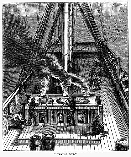 Whaling Trying Out 1874 NTry-Works Or Boilers Set In Brick On The Deck Are Used To Reduce The Whale Blubber To Oil In The Process Called Trying Out Wood Engraving American 1874 Poster Print by (18 x ()
