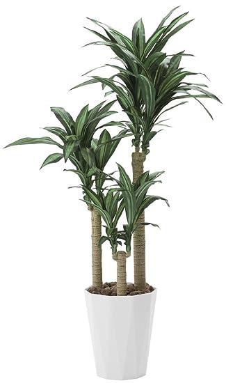 Amazon.co.jp: tree-h/観葉植物 ...