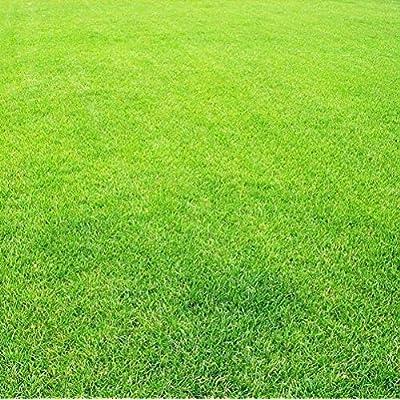 1000 Bluegrass Seeds Greensward Grass-plot Lawn Organic Herbs Outdoor Gardening Yard Blue Foot Grass Seeds Home Lawn Decoration : Garden & Outdoor