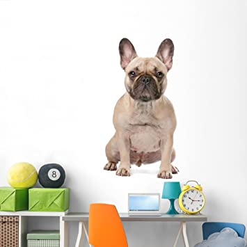 French Bulldog Wall Decal by Wallmonkeys Peel and Stick Graphic (72 in H x 48  sc 1 st  Amazon.com & Amazon.com: French Bulldog Wall Decal by Wallmonkeys Peel and Stick ...