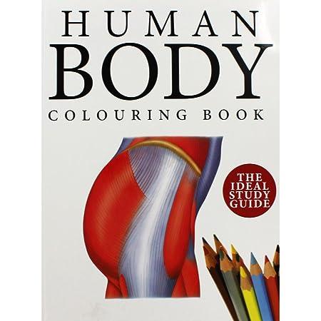 Amber Books Human Body Colouring Book: Amazon.co.uk: Kitchen & Home