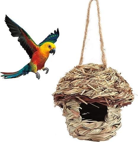 Wild Birds Greys Amazon Macaws Cage Mating Nesting Box Hatching House BIRDS CAGE