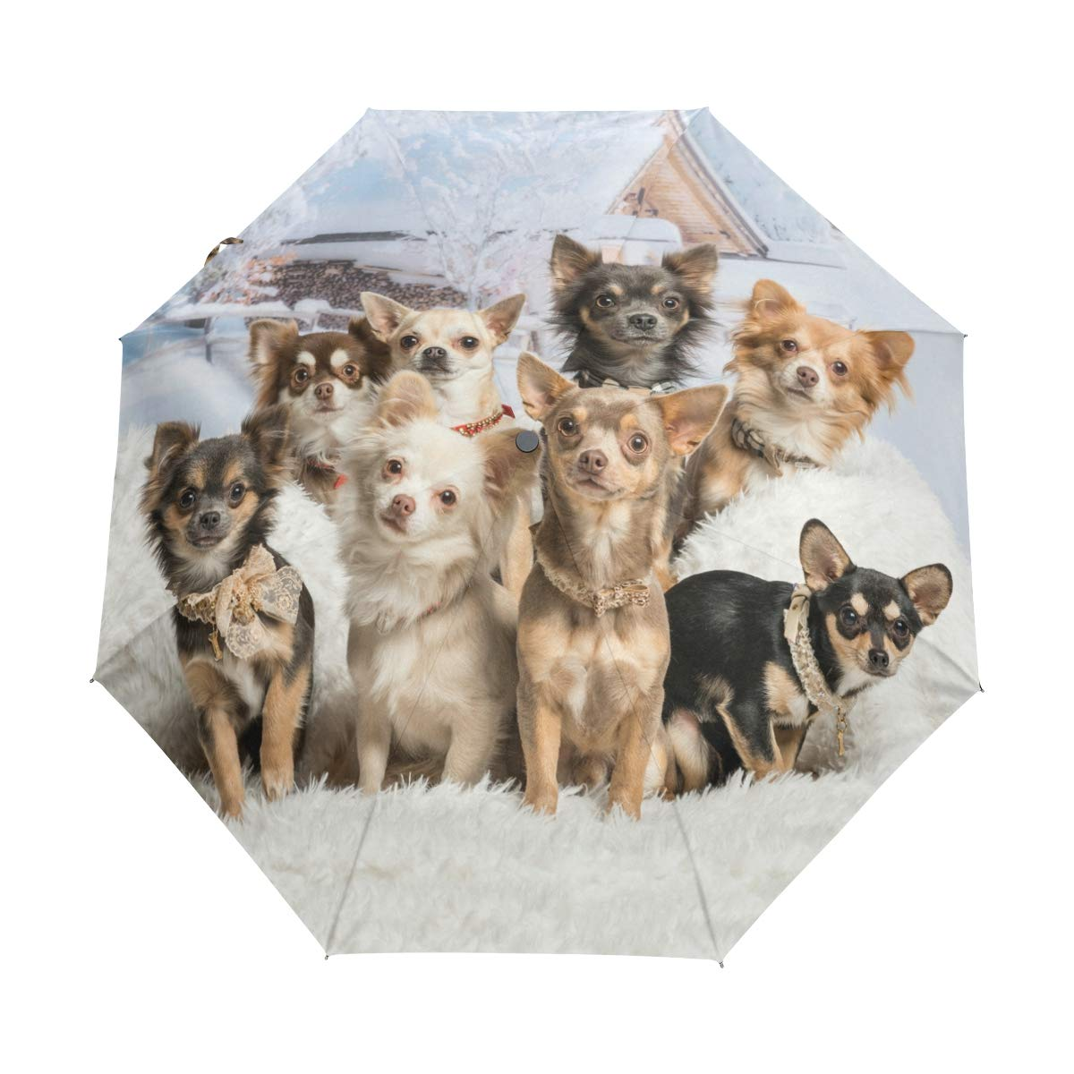 My Daily Cute Chihuahuas Dog Travel Umbrella Auto Open/Close Lightweight Compact Windproof