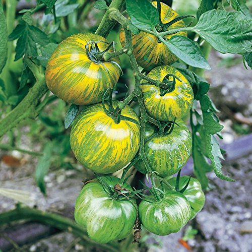 Park Seed Green Zebra Tomato Seeds