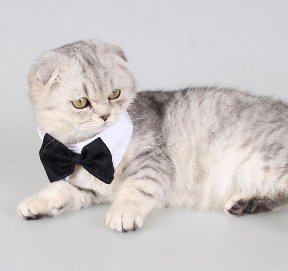 Diyafas 2 Piezas Corbata Formal del Gato Perro Perrito Gatito Algod/ón Bowknot Banda de Cuello Pajarita Ajustable para Mascotas
