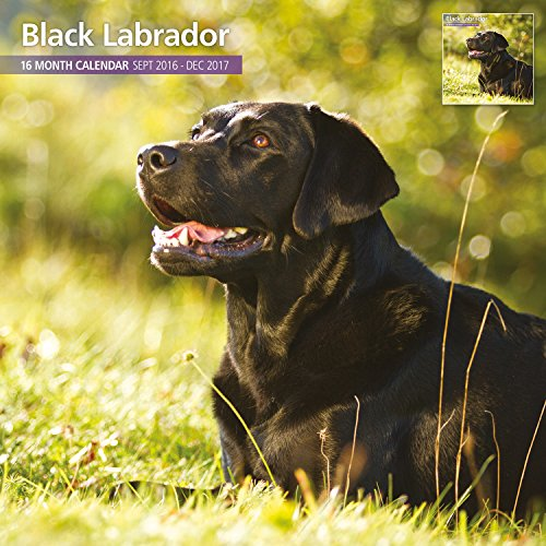 Magnet & Steel 2017 Black Labrador Calendar, Traditional Wall Calendar