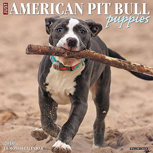 American Pit Bull Terrier Puppies 2019 Wall Calendar (Dog Breed Calendar)