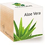 Feel Green Ecocube Aloe Vera Exotics, Grow Your Own Kit, Sustainable & Unusual Gift (100% Eco Friendly), Plant in A Wooden Cube, Made in Austria