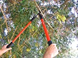TABOR TOOLS GL16A Bypass Lopper, Chops Branches