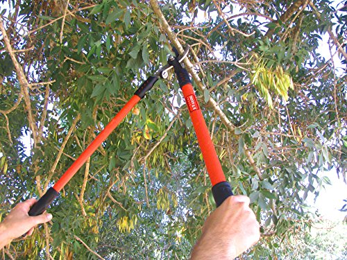 TABOR TOOLS GL16 Bypass Lopper, Makes Clean Professional Cuts, 1.25-Inch Cutting Capacity, 28-Inch Tree Trimmer and Branch Cutter Featuring Sturdy Extra Leverage 22-Inch Handles. by TABOR TOOLS (Image #3)