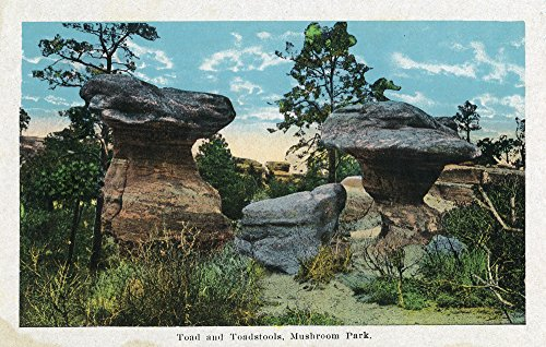 Colorado Springs, Colorado - View of the Toad and Toadstools at Garden of the Gods (16x24 SIGNED Print Master Giclee Print w/Certificate of Authenticity - Wall Decor Travel Poster)
