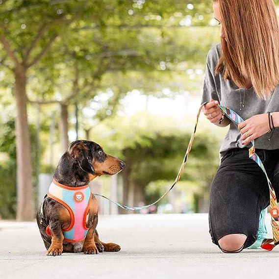 Dukier - Arnés Reversible para Perro, con Malla Transpirable ...