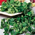 "3g (Approx. 2100) Corn Salad Seeds ""Volhart 3"" Lambs Lettuce, French Salad, Good for Planters 'Fresh Seeds - Best Before 12.2017!'"