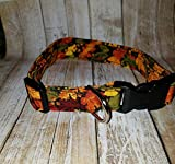 Bright Fall Autumn Leaves Dog or Cat collar