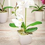 Orquídea branca Faux Fiore - Vaso branco - Plantas sintéticas - 34 cm - 1 caixa - Restaurantware