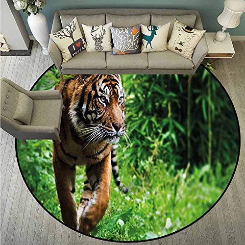 (Round Carpets,Tiger,Siberian Wild Cat Habitat,All Season Universal,4'11