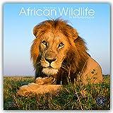 Wildlife Calendar - Tiger Calendar - Lion Calendar - Elephant Calendar - Monkey Calendar - Calendars 2017 - 2018 Wall Calendars - Animal Calendar - African Wildlife 16 Month Wall Calendar by Avonside