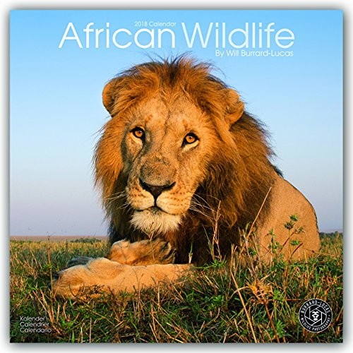 - Wildlife Calendar - Tiger Calendar - Lion Calendar - Elephant Calendar - Monkey Calendar - Calendars 2017 - 2018 Wall Calendars - Animal Calendar - African Wildlife 16 Month Wall Calendar by Avonside