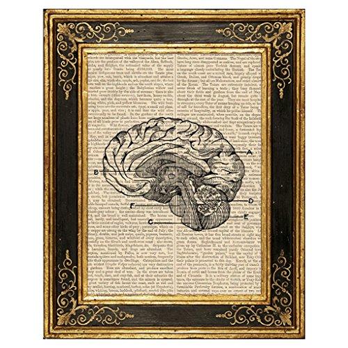Dreamery Studio Brain Vintage Anatomy Illustration Art Print on Upcycled Antique Book Page, 8X10.5 by Dreamery Studio