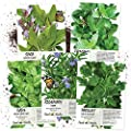 Seed Needs Italian Herb Seed Collection, Non-GMO (Basil, Rosemary, Sage, Parsley & Oregano)