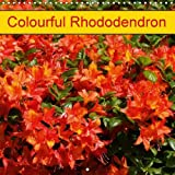 Amazon / Calvendo Verlag GmbH: Colourful Rhododendron 2017 Beautiful Rhodendrons in Park and Garden Calvendo Hobbies (Kattobello)
