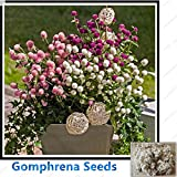 ChinaMarket Gomphrena Seeds Pink Purple white Bonsai Flower seeds 100seeds/bag