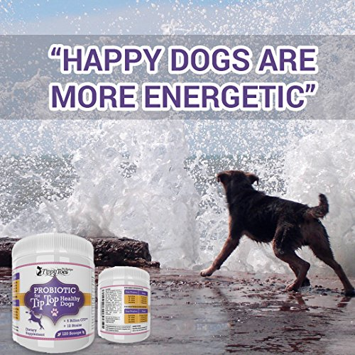 How To Relieve Gas In Dogs Naturally