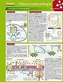 Lerntafel: Pflanzenphysiologie im Überblick (Lerntafeln Biologie)