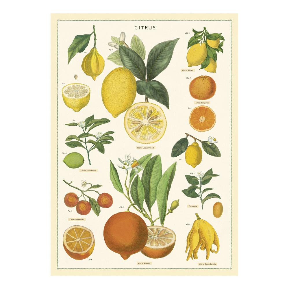 Cavallini Papers & Co. Inc, Citrus Wrap, 20x28 inches (WRAP/Citrus)