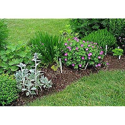 Fo-ti Root Powder 16oz (1 Pound) : Herb Plants : Garden & Outdoor