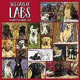 365 Days of Labs 2019 Wall Calendar (Dog Breed Calendar)