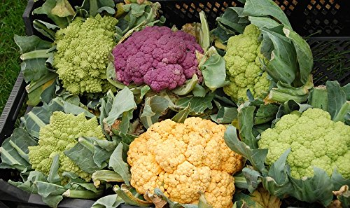 Home Comforts Laminated Poster Colorful Vitamins Cauliflower Healthy Vegetables Poster Print 11 x 17