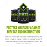 Legion Genesis Green Superfood Powder - With