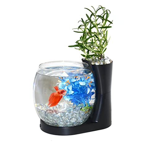 .com : elive betta fish bowl / betta fish tank with planter ...