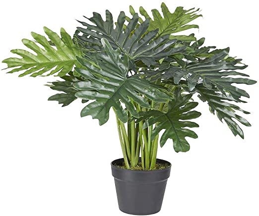 HTT Decorations Philodendron Xanadu - Planta Artificial: Amazon.es ...