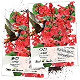 Seed Needs, Scarlet Red Sage (Salvia coccinea) Twin Pack of 800 Seeds Each