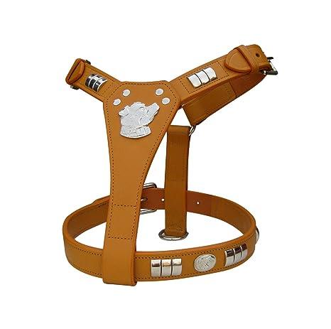 ZAIN TACK Staff Staffordshire - Arnés para Perro con diseño de ...