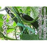 てしまの苗 キュウリ苗 なるなる 9cmポット 断根接木苗 野菜苗